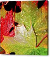 Wet Leaves Of Fall Canvas Print