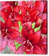 Wet Lilies Canvas Print