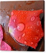 Wet Petal 1 Canvas Print