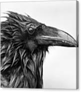 Wet Raven Canvas Print