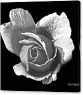 Wet Rose Portrait Canvas Print