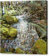 Wet Spot In Woods Canvas Print