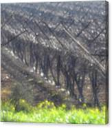 Wet Vineyard Canvas Print