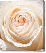 Wet White Rose Canvas Print
