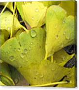 Wet Yellow Leaves 2 Wc  Canvas Print