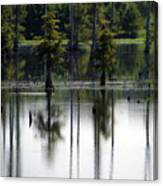 Wetland Canvas Print