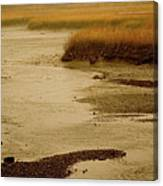 Wetland Stream Canvas Print