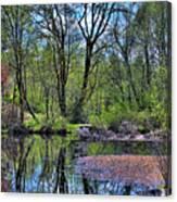 Wetlands Lake Canvas Print