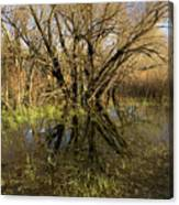 Wetlands Mirror Reflection Canvas Print