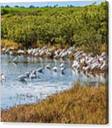 Wetlands Watering Hole Canvas Print