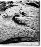 Whake Driftwood Canvas Print
