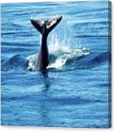 Whale Tail Canvas Print