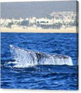 Whale Tail In Cabo Canvas Print