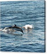 Whale Watching And Dolphins 1 Canvas Print
