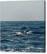Whale Watching And Dolphins 3 Canvas Print