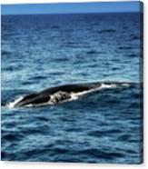 Whale Watching Balenottera Comune 3 Canvas Print