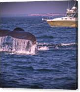 Whale Watching - Humpback Whale 3 Canvas Print