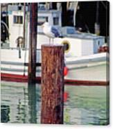 Wharf Gull Canvas Print