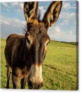 What Did You Say Canvas Print