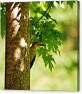 Whats A Woodpecker To Do Canvas Print