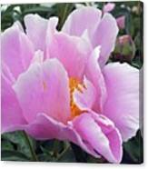 What's In A Name - Bowl Of Beauty Peony Canvas Print