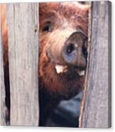 Whats New On Your Side Of The Fence Canvas Print