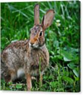 Whats Up Doc Canvas Print