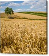 Wheat And A Tree Canvas Print