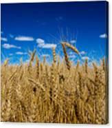 Wheat Field Canvas Print