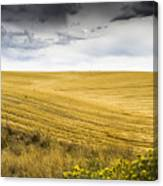 Wheat Fields With Storm Canvas Print