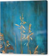 Wheat On Blue 1 Canvas Print