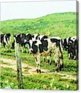 When The Cows Come Home 2 . Reinterpreted Canvas Print