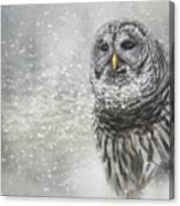 When Winter Calls Owl Art Canvas Print