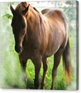 When You Dream Of Horses Canvas Print