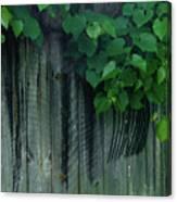 Wher Rhe Grape Vines Twine Canvas Print