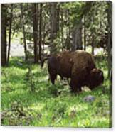 Where The Bison Roam Canvas Print
