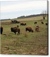 where the Buffalo Roam 3 Canvas Print
