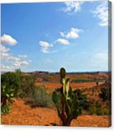 Where The Cactus Grow Canvas Print