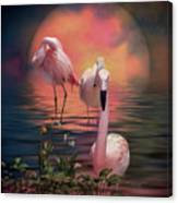Where The Wild Flamingo Grow Canvas Print