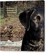 Where's The Geese Labrador 4 Canvas Print