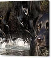 Where's The Geese Labrador 6 Canvas Print