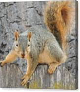 Where's The Nuts? Canvas Print