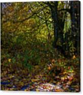 Where's The Trail Canvas Print