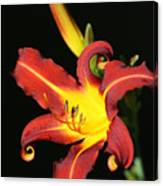 Whimsical Daylily Canvas Print