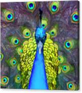 Whimsical Peacock Canvas Print
