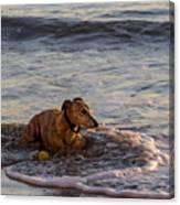 Whippet Cooling Off Canvas Print
