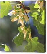 Whirligigs on Field Maple in New Mexico Canvas Print
