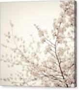 Whisper - Spring Blossoms - Central Park Canvas Print