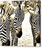 Whispering Zebras Canvas Print