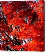 Whispers Of A Japanese Maple Canvas Print